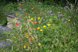 Seed mix for annual mini meadow